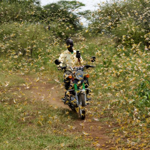 World Vision: Uganda Locusts