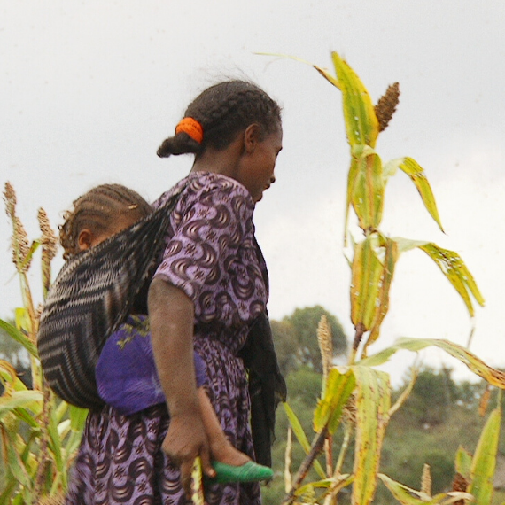 World Vision: Devastated sorghum crop - Ethiopia