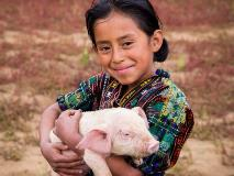 Vilma holds one of the piglets from her family's farm in Guatemala.