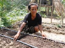 Farmers in Timor-Leste are growing vegetables to eat and sell using drip irrigation.