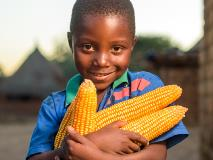 Chansa loves to help and collect maize from his family's farm in Zambia.