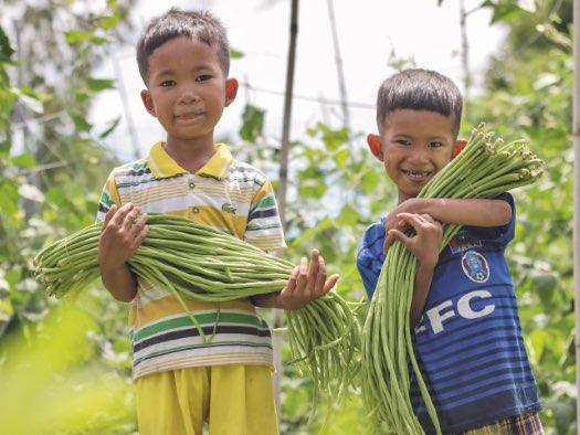 Vegetable garden starter pack