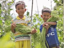 Sopheak and his younger brother Seng help their parents collect beans to sell from their farm in Cambodia.